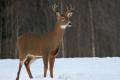 Buck 002